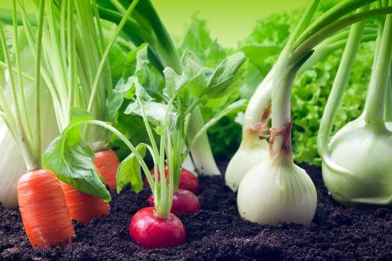 Un buon raccolto è molto vicino. Con l'80% in meno di granulato anti lumache.